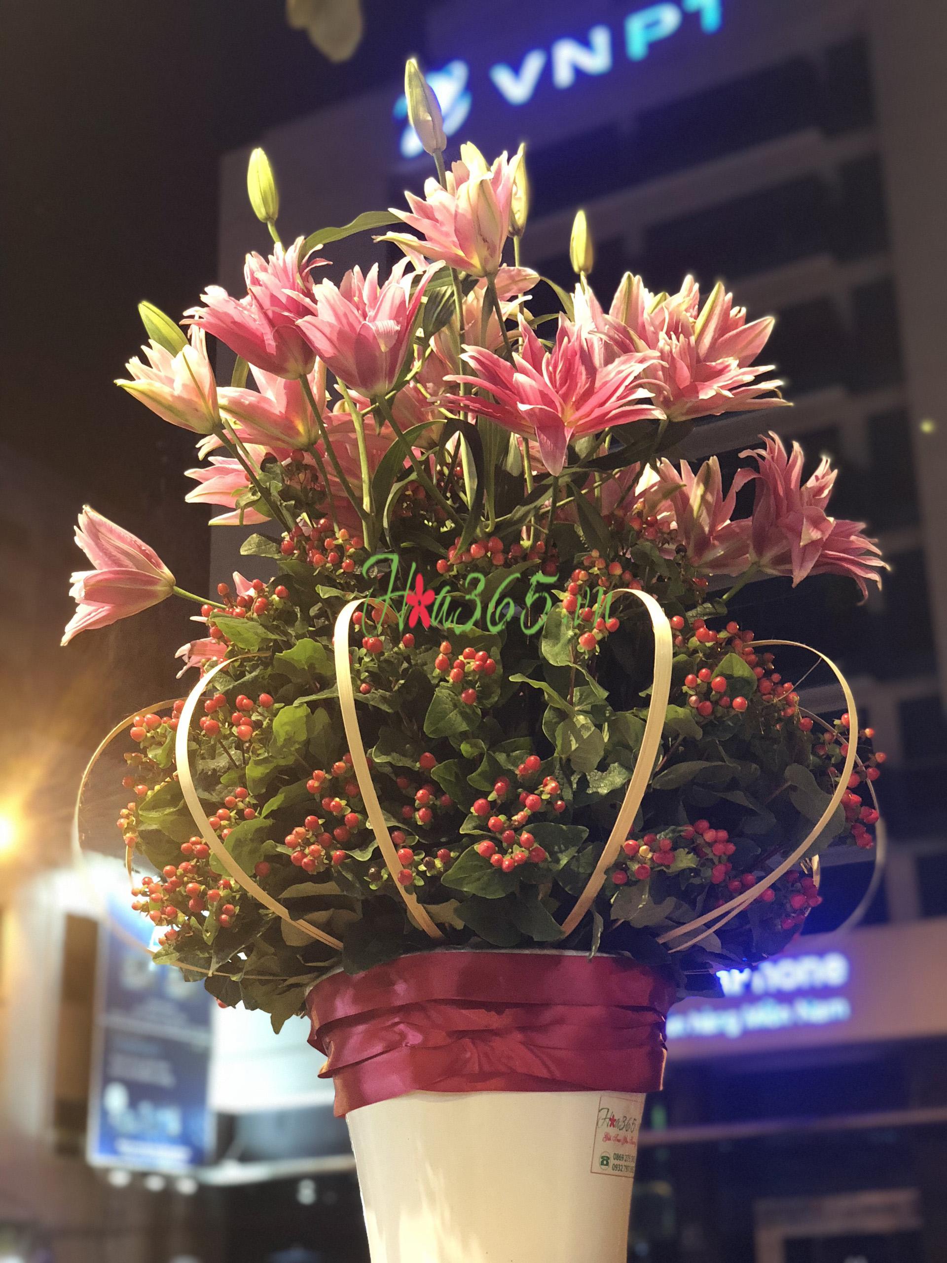 hoa ly kép hà lan, hoa lyly, hoa chưng tết đẹp